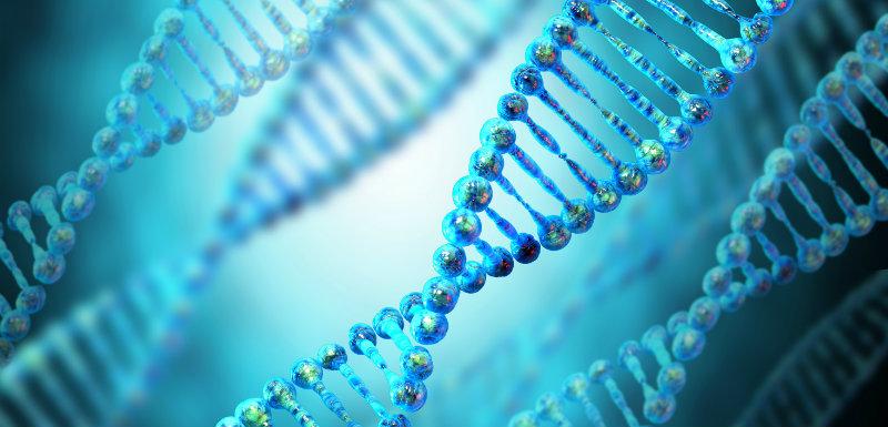 Des gènes contre l'obésité et le diabète ?