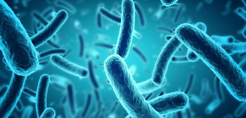 microbiote syndrome métabolique